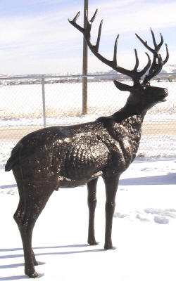 Bull Elk (Head Turned)